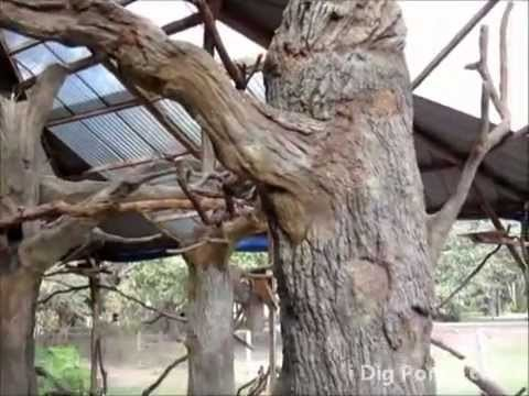 Artificial Concrete Trees in Bird Aviary