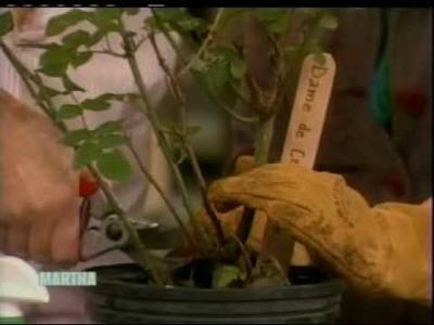 BBG Rosarian Sarah Owens on Martha Stewart!