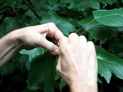 How To Make A Poplar Leaf Basket