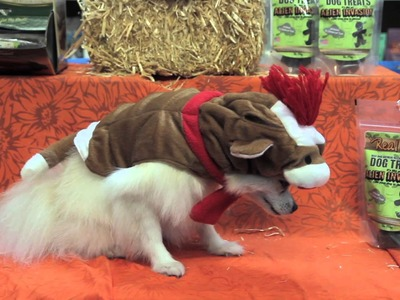 The Best Halloween Costumes for Dogs : Dog Care Tips
