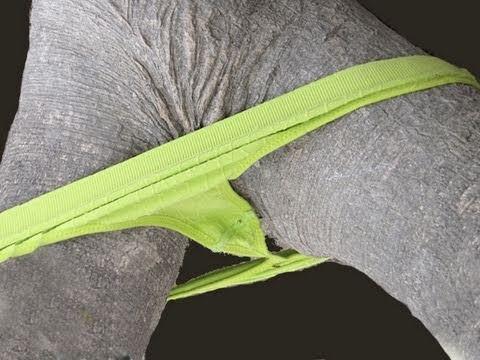 PANTIES For Trees! -- IMG! 17