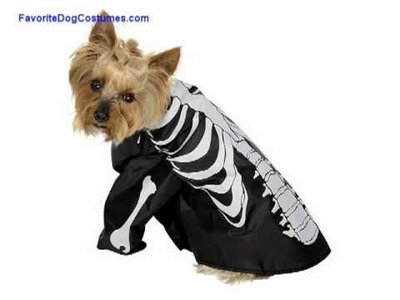 Favorite Dog Costumes for Halloween