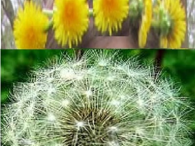 How to make Dandelion Crown - Headband