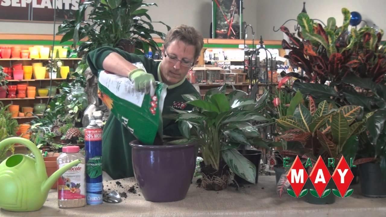 How to Properly Transplant Houseplants