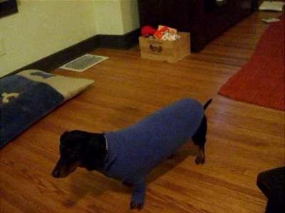 Margo the Dachshund and her Magic Sweater!