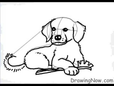 How to Draw a Golden Retriever Puppy