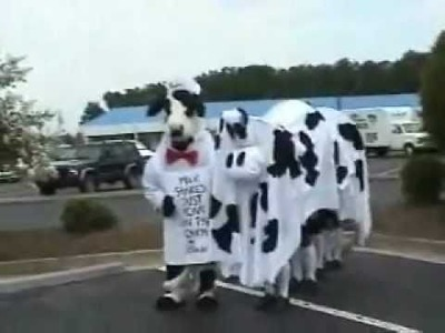 Awesome Homemade Cow Costume!