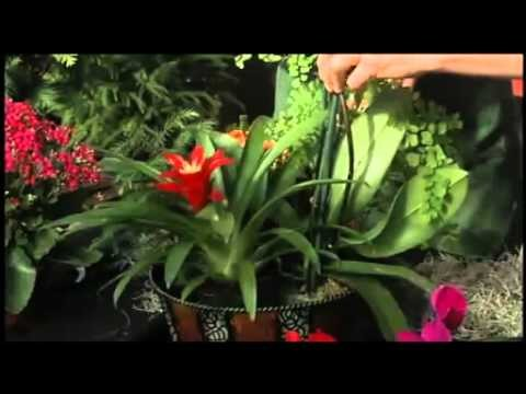 How to Make a Christmas Floral Arrangement