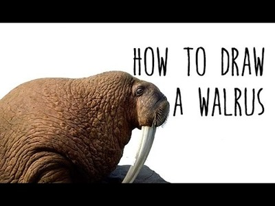 How to draw a Walrus - drawing animals with kids