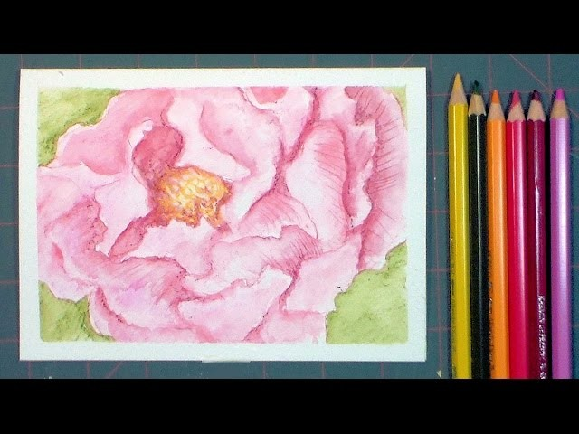 Watercolor Pencil Peony Painting-REAL TIME Tutorial!