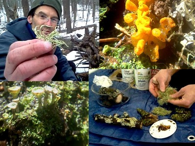 How to Make Terrarium Video: Lichen Moss Soil Stones