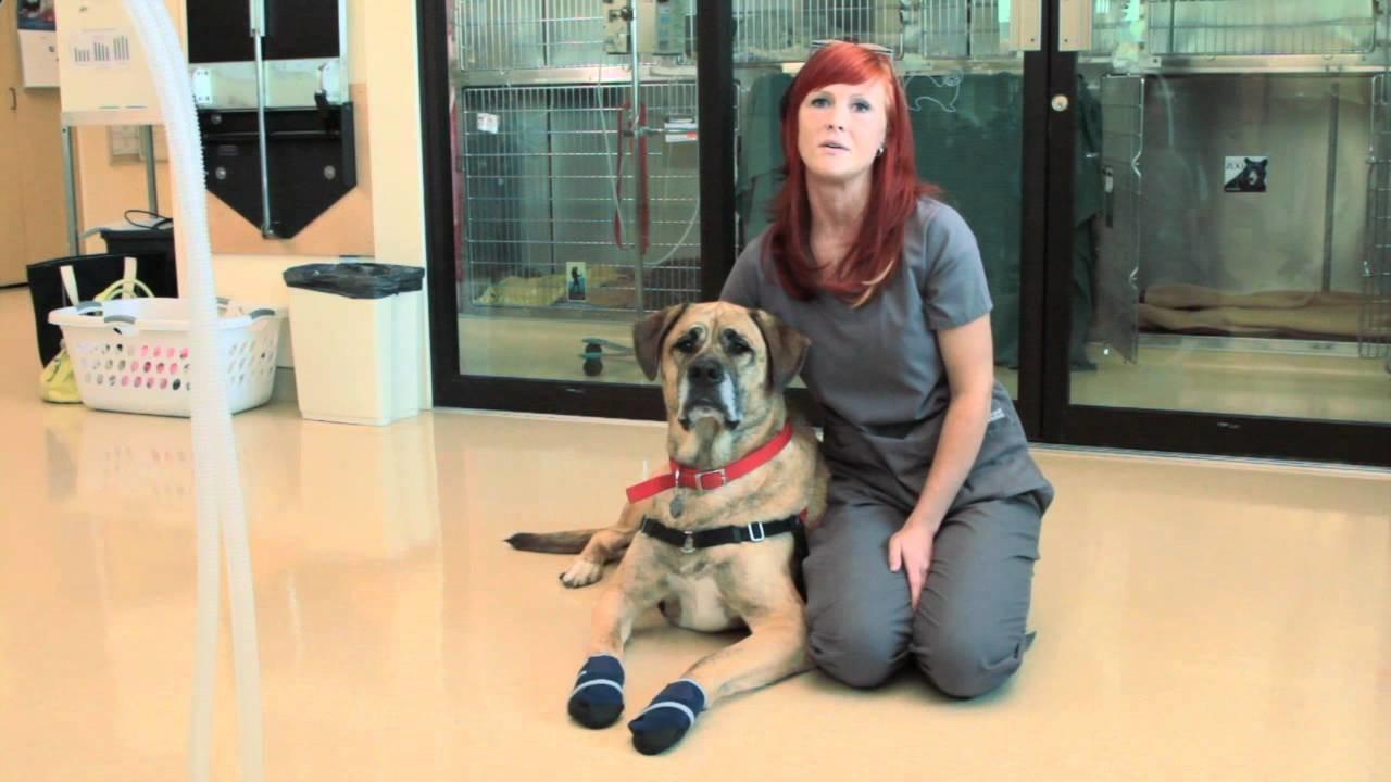 Healers Medical Dog Booties