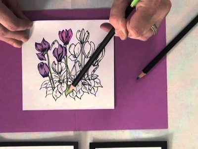 Tip of the Day: Colored Pencils Meet Alcohol Markers By Crafter's Companion