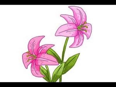 How to draw a Stargazer Lily