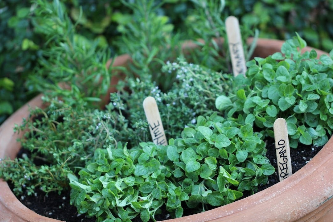 How To Start an Herb Garden (EARTH DAY COLLAB!)