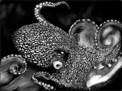 Paper Project: Octopus