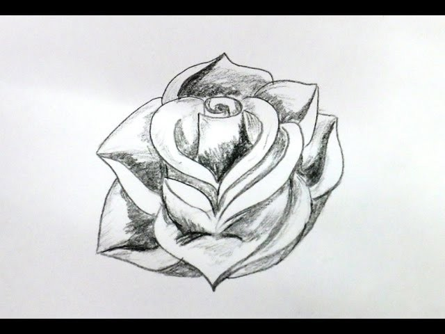how to draw a rose flower step by step easy