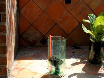 Building a soda bottle garden.wmv