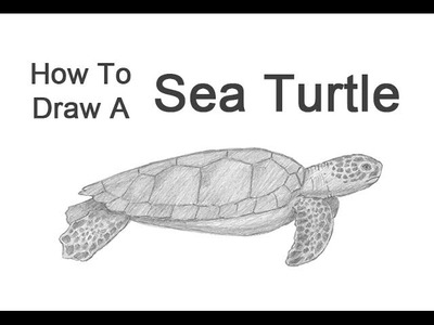 How to Draw a Green Sea Turtle