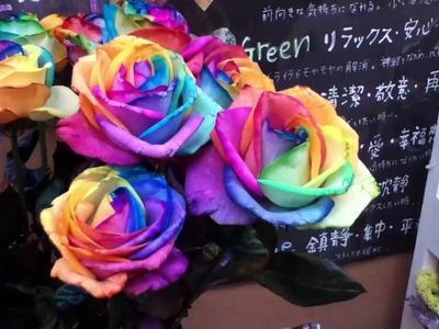 Rainbow Roses in Shinjuku Tokyo Japan