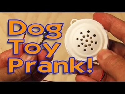 Dog Toy Prank!