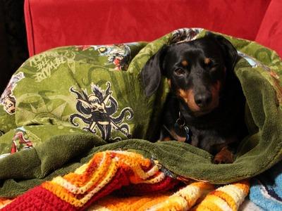DIY Puppy Snuggle Sleeper Bag [EASY] - Whitney Sews