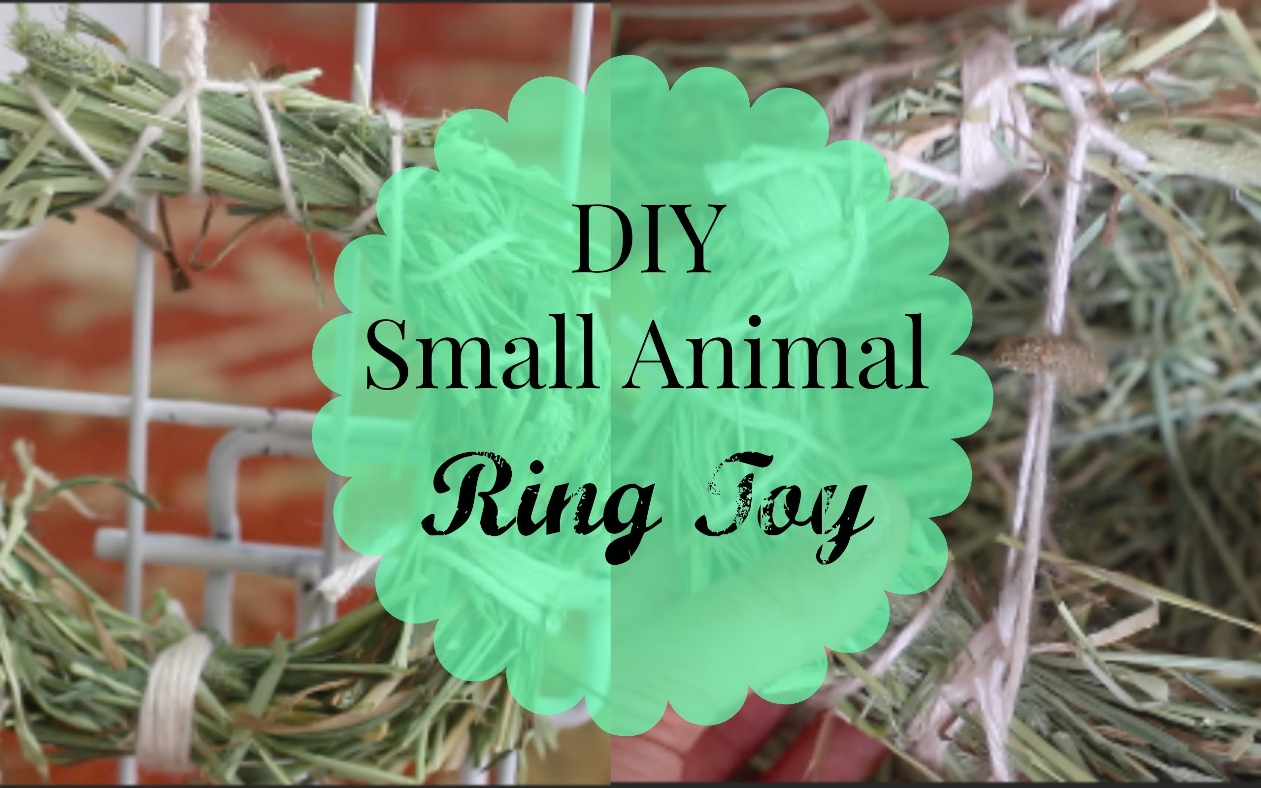 DIY Ring Toy | Hamsters, Guinea Pigs and Rabbits