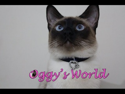 Transform Your Necklace to Stylish Cat Collar-DIY