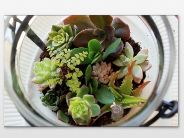 Make Your Own Terrarium! (Arden's officially in the garden.)