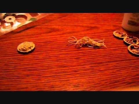 How To Make Miniature Dollhouse Spaghetti