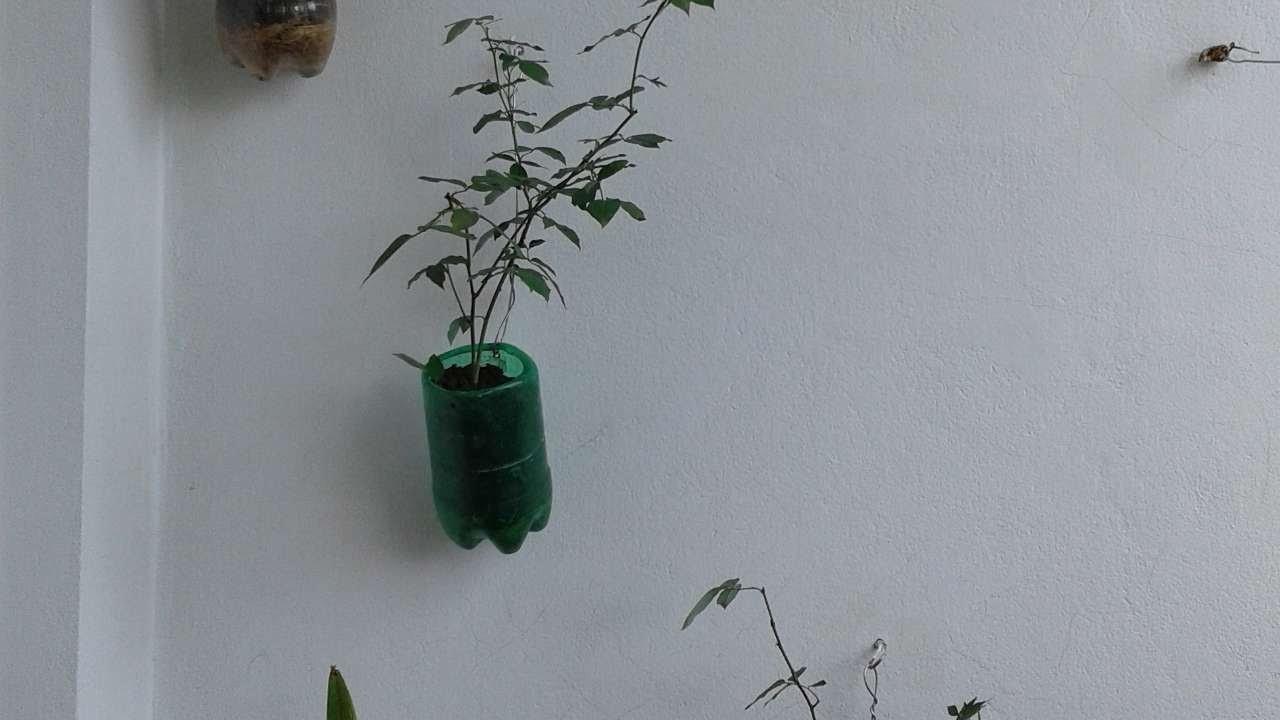 How To Make Drinks  Bottle  Hanging  Planter - DIY Crafts Tutorial - Guidecentral