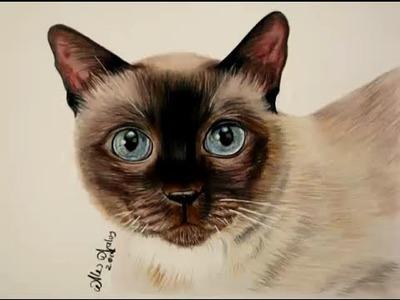 Cómo dibujar pelo de animal (Gato). How to draw a kitten