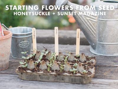 Grow Flowers in an Egg Carton with Sunset Magazine - Honeysuckle