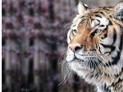 Strathmore Colored Pencil paper review + tiger painting w. Lachri