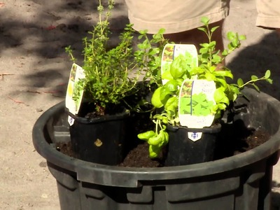 How To Plant Seedlings - DIY At Bunnings