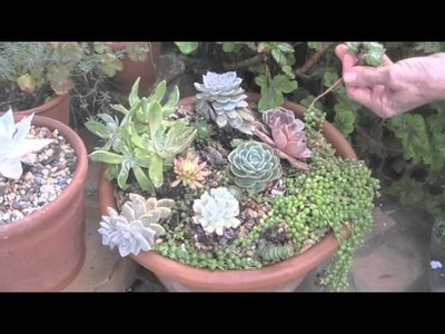 Lowe's Creative Ideas Container Garden Recipe