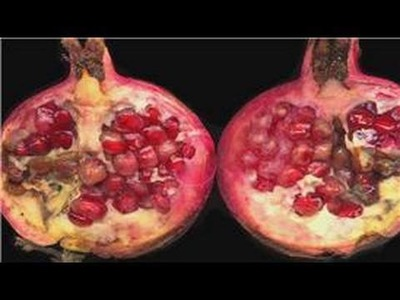 Gardening From Seeds : How to Grow Pomegranate From Seeds