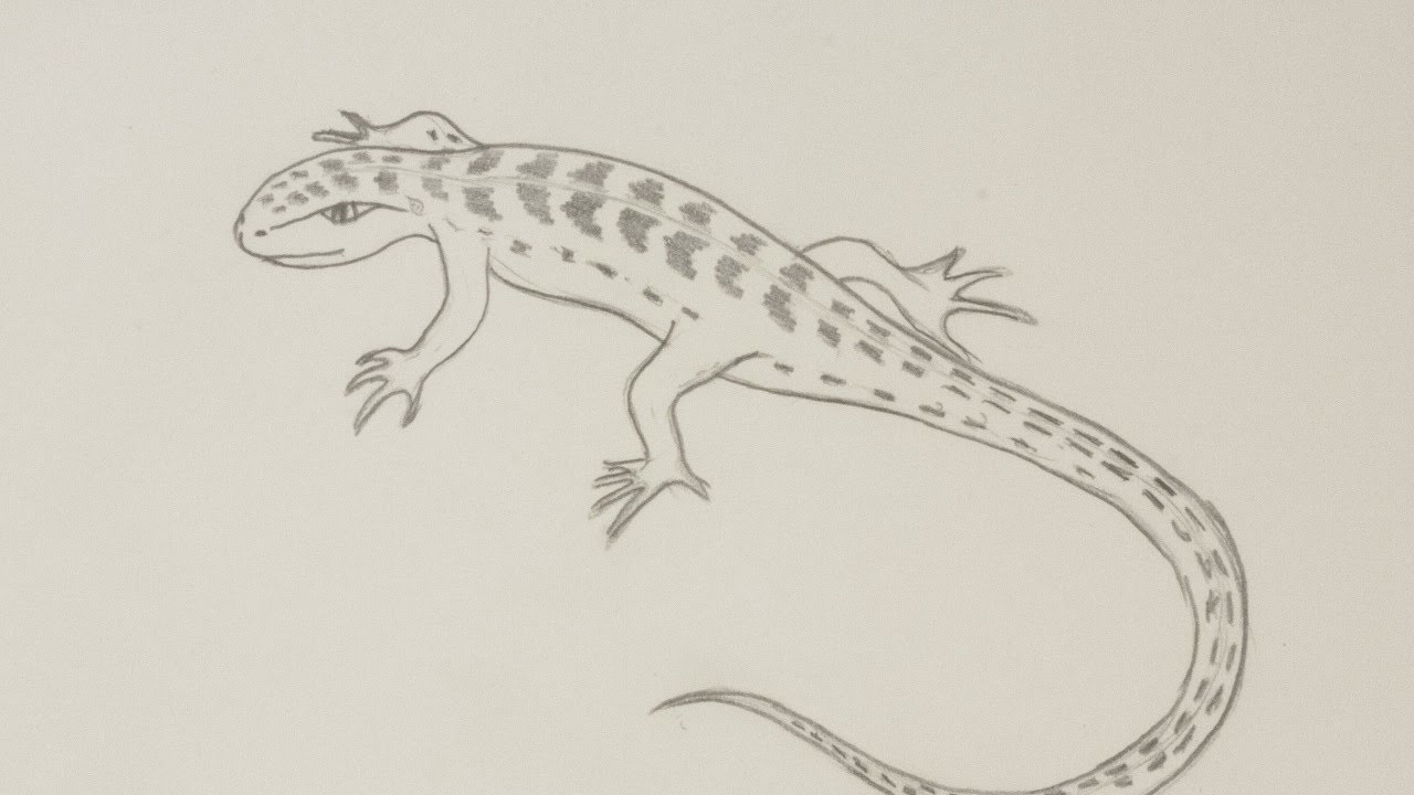 Draw a Lizard by Pencil - DIY Crafts - Guidecentral