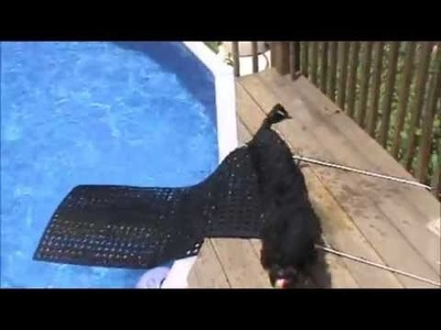 DIY Dog Ramp for Swimming Pool