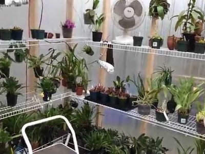 Greenhouse Build: My New DIY 10 x 16 Greenhouse Tour