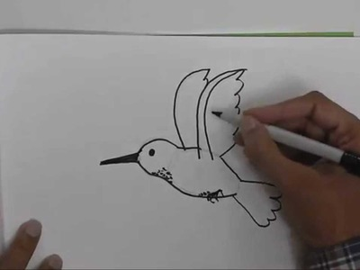 How to draw a Humming Bird - in easy steps for children, kids, beginners