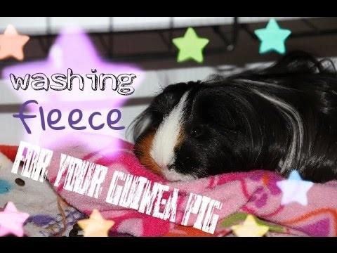 How-To: Wash Guinea Pig Fleece