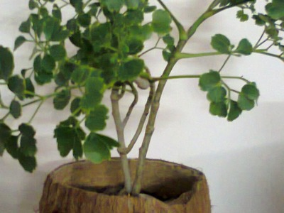 How To Easily Make a Rustic Coconut Shell Planter - DIY Home Tutorial - Guidecentral