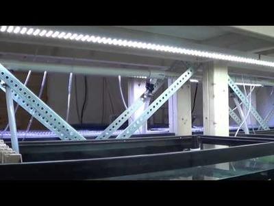 #284: How to Build a DIY LED Aquarium Light - DIY Wednesday