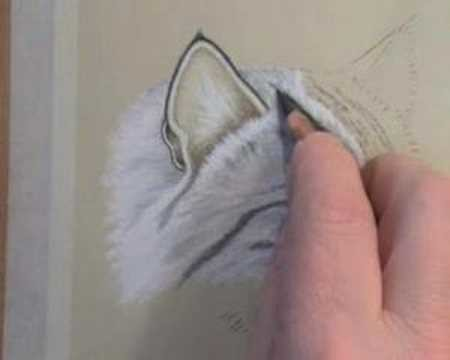 How To Draw Cat's Fur