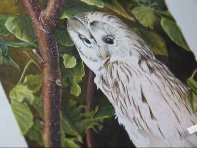 Wildlife art - owl painting in watercolour step by step demo