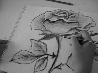 Speed drawing of a Rose