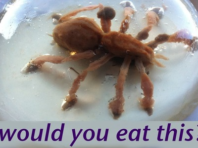 Would you eat a spider? Food Art Jello Art HOW TO COOK THAT Ann Reardon Gelatina