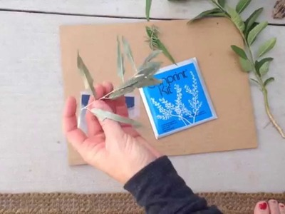 How to make a Cyanotype or Sun Print using already prepared paper or a kit