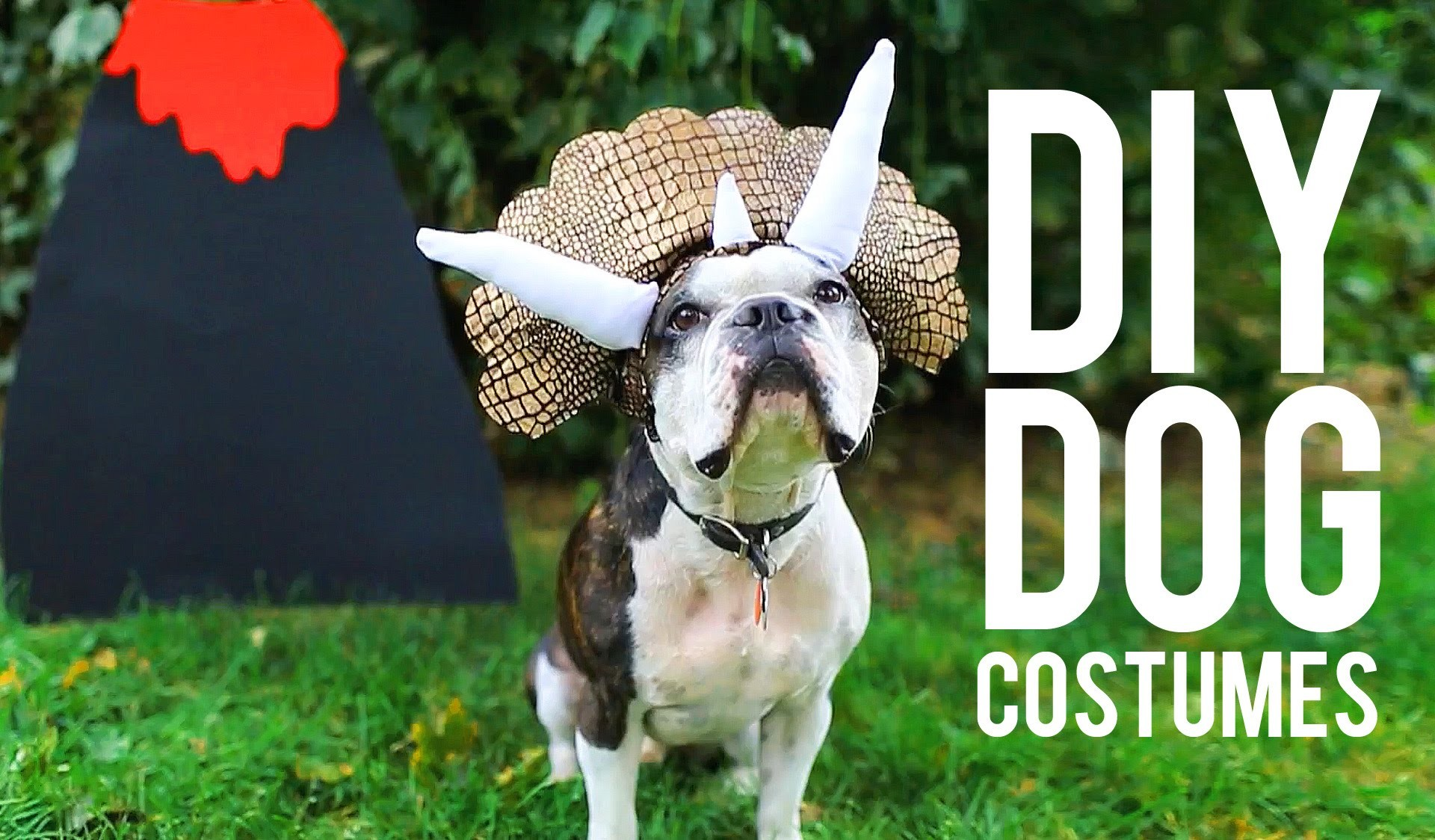 DIY COSTUMES FOR YOUR PET